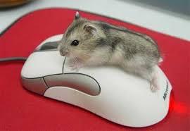 Выбор компьютерной мыши