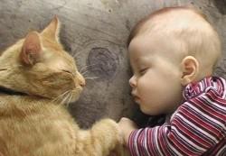Новорожденный и кошка: польза и риски