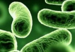 Доказана польза пробиотиков для младенцев