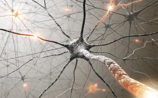 Опыты на мозге, которые помогут подсветить отдельный нейроны