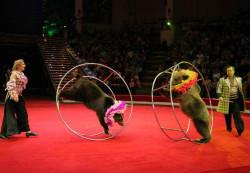 Идем в цирк. В каком возрасте пойти в цирк?