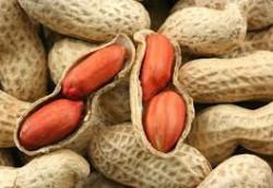 Исследователи считают, что маленьким детям нужно есть арахис, чтобы снизить аллергию