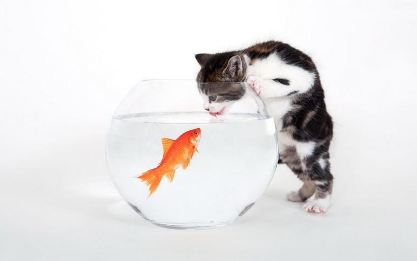 Выбор домашнего животного