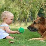 Собаки и дети. Какую собаку взять семье с детьми?