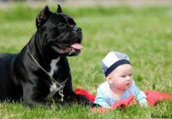 Ребенок и собака под одной крышей
