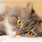 Насморк у кошек: симптомы, причины