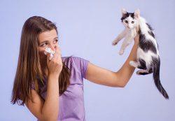 Курс антибиотиков в детстве может спровоцировать развитие аллергии