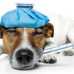 Причины появления кашеля у собаки как будто она подавилась