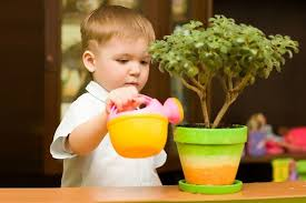 Ядовитые домашние растения и ребенок