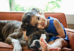 5 опасных заблуждение о дружбе ребенка и собаки