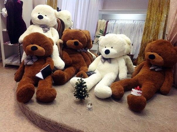 Мягкие медведи в интернет-магазине «Bigteddy»