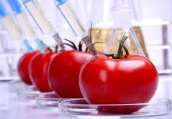 Внимание, ГМО!