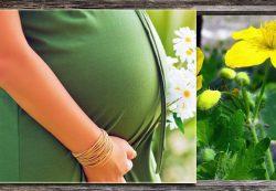 Осторожно: растительные средства при беременности