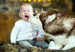 Малыш боится собак. Советы от «суперняни»