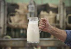 Зачем человеку молоко?