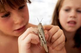 Почему малыши жестоки с насекомыми?